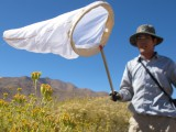James Hung flocks to Anza-Borrego for another reason: bees.